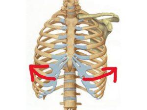 肋骨の広がり