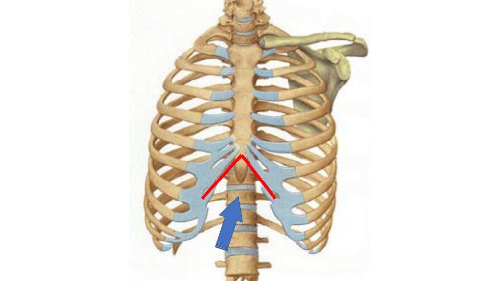 肋骨弓の角度
