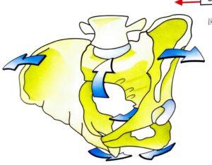 仙骨と寛骨の動き